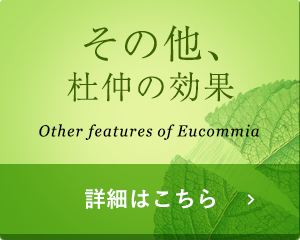 その他、杜仲の効果 Other features of Eucommia